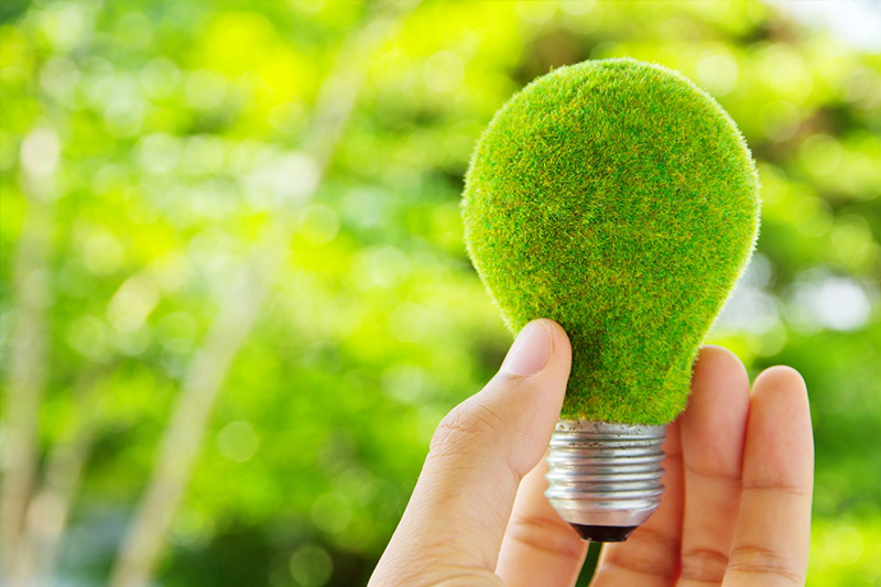 A hand holds a moss-covered green lightbulb.